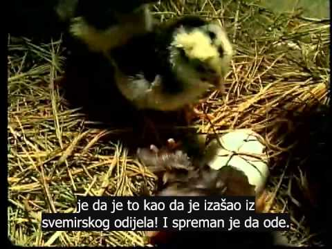 Dokumentarac: Životinje neobjašnjive teorijom evolucije